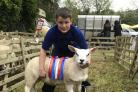 Youngster Stephen Teward was showing sheep at Eastgate Sheep Show in Weardale with help from his parents