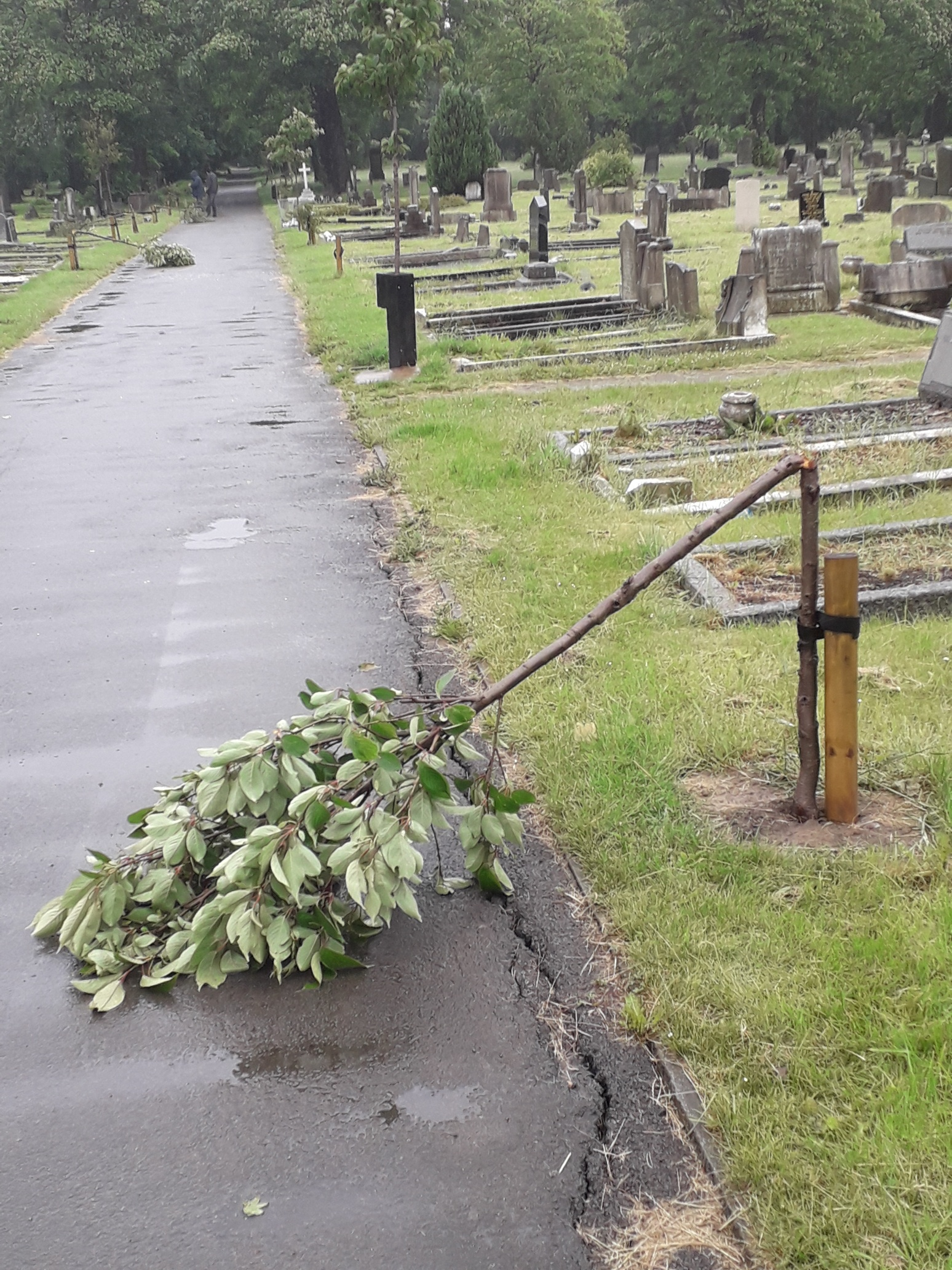 Middlesbrough's Linthorpe Cemetery trees attacked