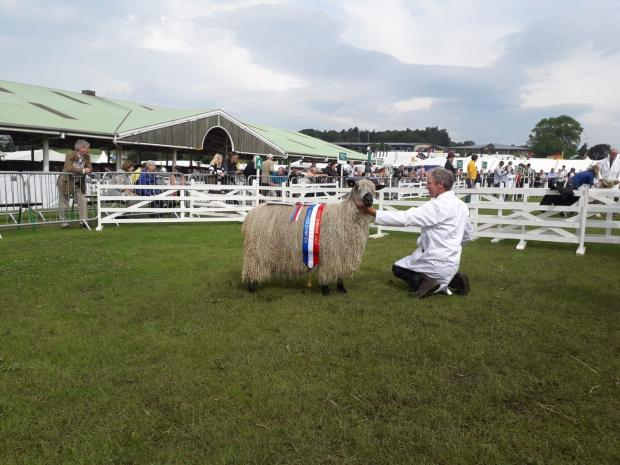 The Northern Echo: Adrian Helm with his Teeswater breed champion