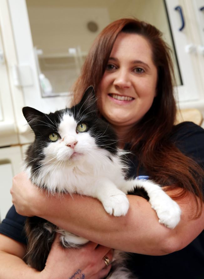Darlington's RSPCA Cat Rehoming Hub celebrates first year