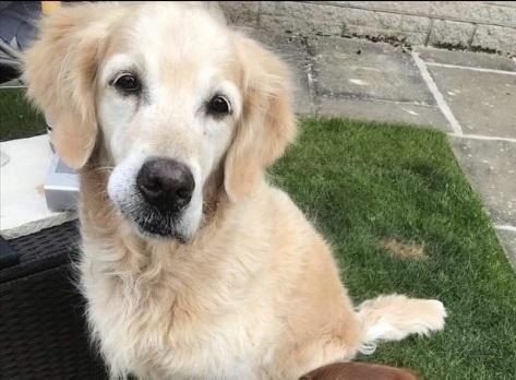 Polly went missing during a walk between Wolsingham and Frosterley on Wednesday, July 31