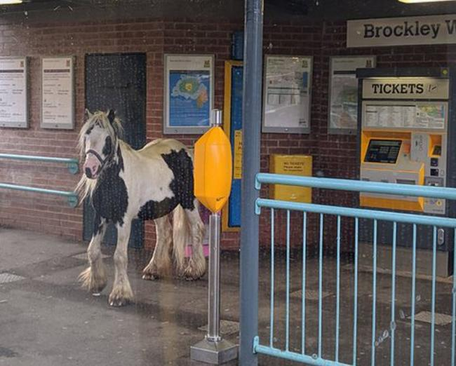 The horse 'waiting for a train' on the metro station. Picture: WILL MAPPLEBECK