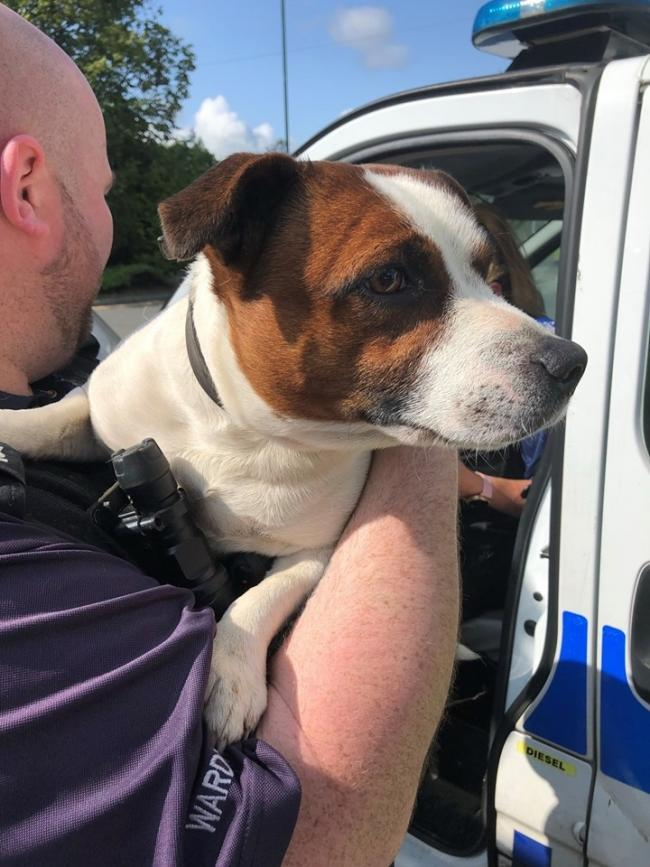 Dog found- police issue appeal to find owner