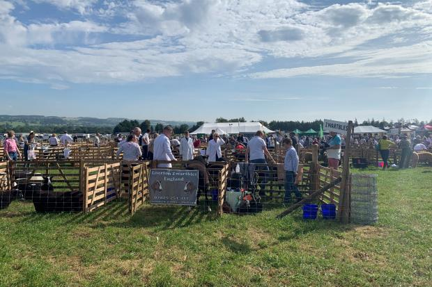 It is the 105th version of the Wensleydale Show near Leyburn Picture: JIM SCOTT