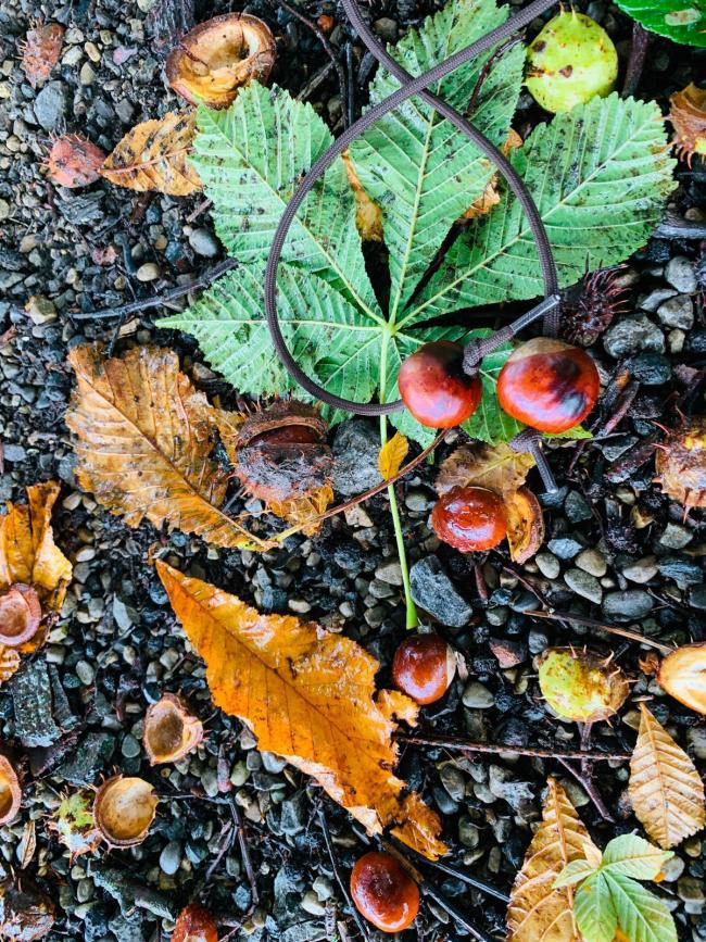 Conkers at Thorp Perrow