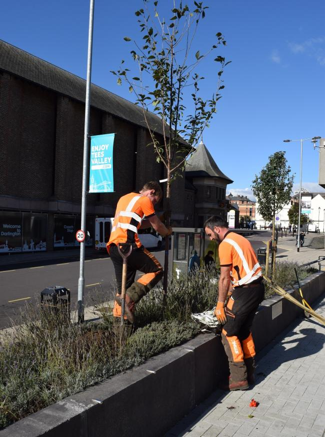 Trees being planted outside the council offices in Darlington town centre