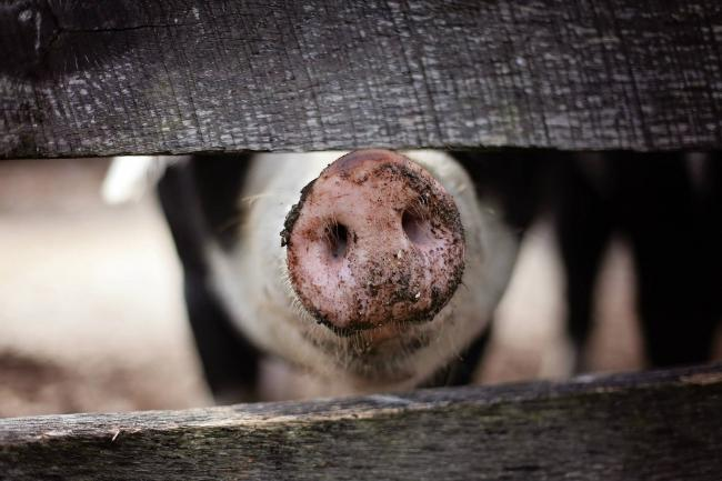 An application to expand the pig operation at Biggin Hill Farm, in New Brancepeth, were withdrawn on Monday