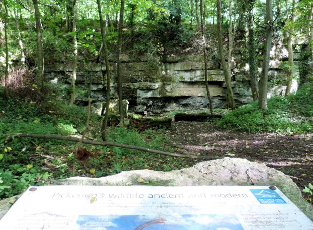 The Northern Echo: An escarpment in Pickering woods