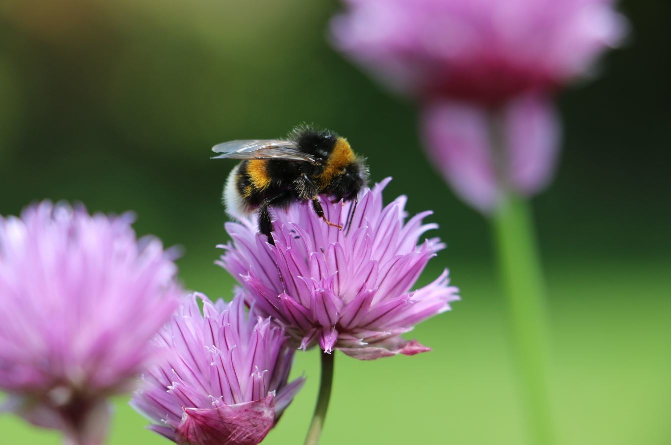 Tees Valley Wildlife Trust call for action after insect decline report - The Northern Echo