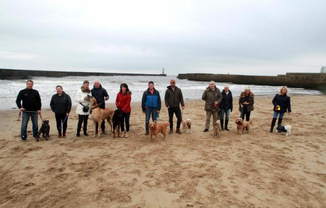 Dog walkers and businesses have mounted a campaign to prevent a potential ban of their pets from certain beaches in Seaham Picture: GAVIN ENGELBRECHT