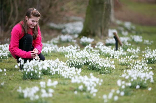 Child Bereavement UK holds a Snowdrop Walk event in Hardwick Park, Sedgefield where participants are invited to plant snowdrops in memory of loved ones. 10 year old Lucy Coulthard plant snowdrops in memory of siblings Laura, Jack and Emma who all died as