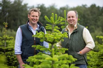 Newburgh Priory Estate preparing 20k Christmas trees