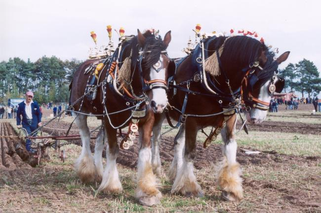The 70th British National Ploughing Championships at Mindrum, Northumberland in October, 2020