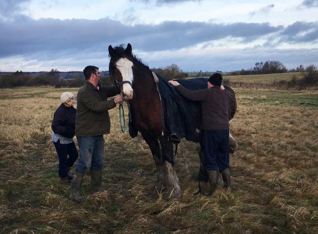 The Northern Echo: The horse is cared for after being rescued from a ditch. Picture: County Durham and Darlington Fire and Rescue Service