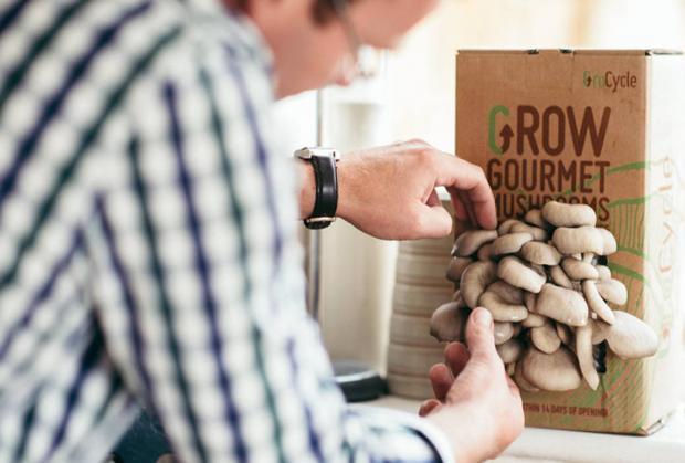 L'Eco del Nord: un kit de culture de champignons est un cadeau amusant pour les papas qui aiment le jardinage. Crédits: Fungi Futures