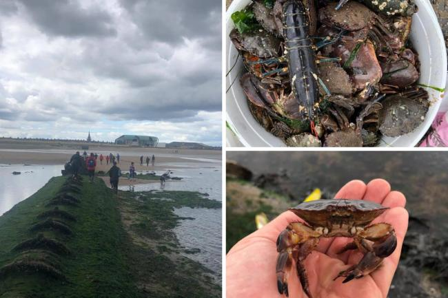 A major operation targeting cockle pickers on Redcar beach has taken place Picture: North Eastern Inshore Fisheries