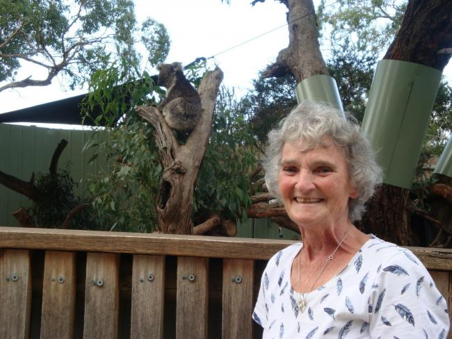 Shirley Read with one of the healthy koalas at Healesville, in Australia