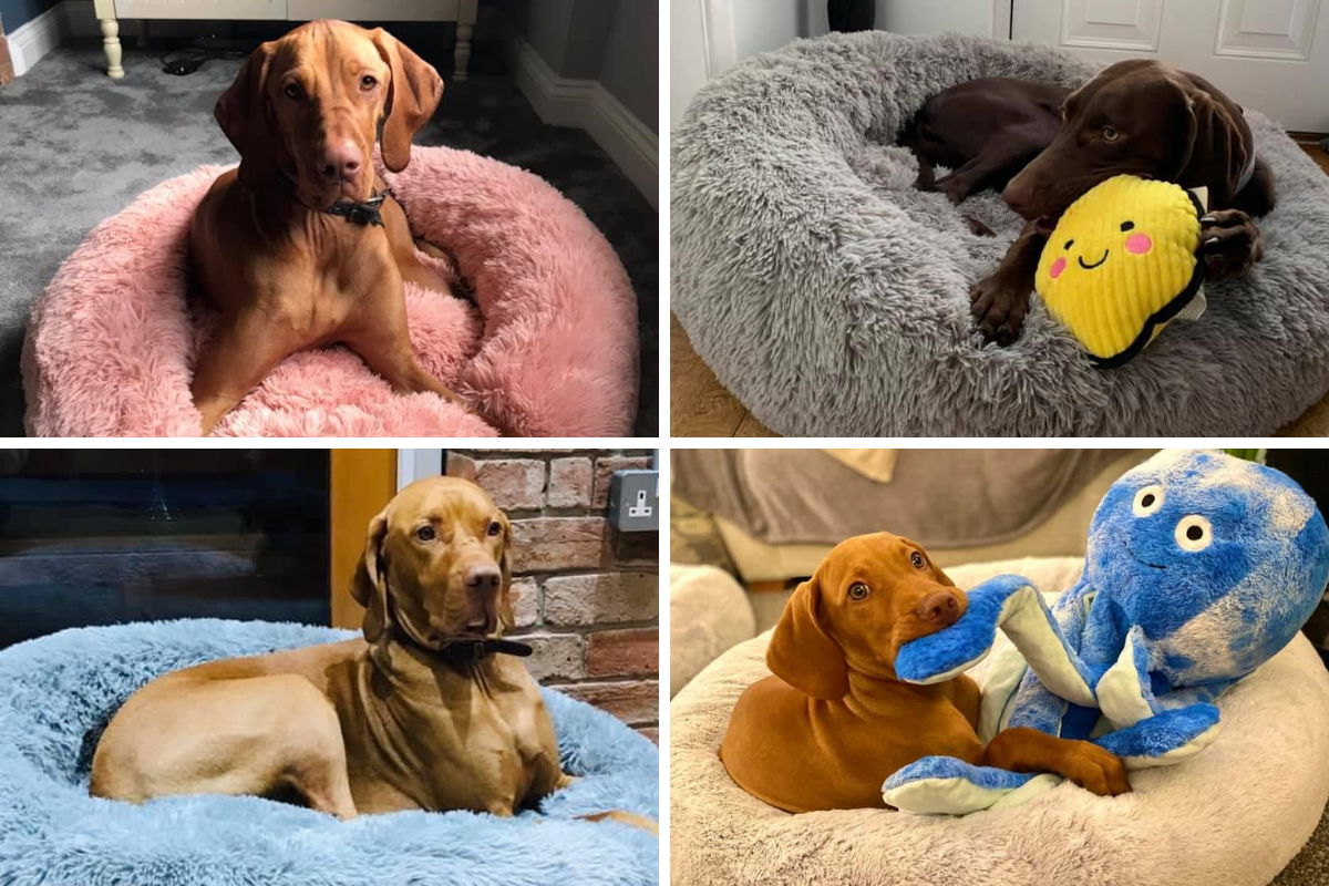 11 of the cutest pictures as dog owners manage to track down Aldi pet bed