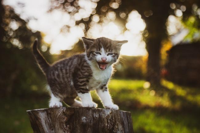 PETA is offering a reward of up to £2,000 for information leading to the arrest and conviction of those responsible throwing kittens out of a moving car in Ripon (file photo) Picture: Pixabay