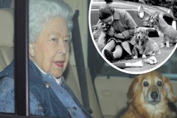 The Queen's corgi Vulcan dies from old age, leaving her with one dog