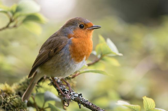 Local housebuilder, Barratt Developments, is planning to boost wildlife across the region with RSPB nature-friendly housing partnership
