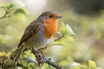 Housebuilder boosts wildlife across region with RSPB partnership