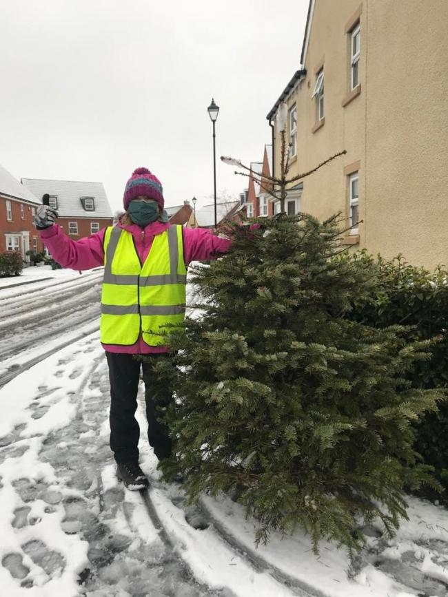 St Cuthbert's Hospice volunteer Susan Donkin, one of the volunteers who worked in household bubbles to collect trees for recycling