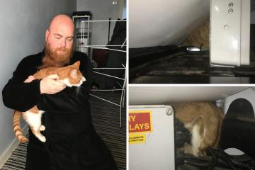 Gateshead: RSPCA reunites cat stuck in van for three days with owner