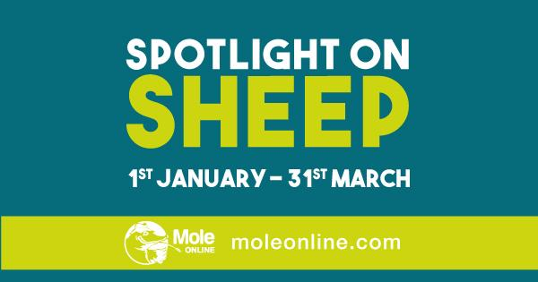 Think about ewe nutrition to safeguard lamb performance