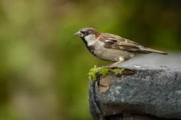 Watching the birdies!