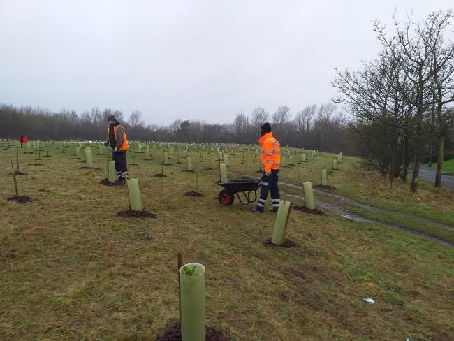 Trees being planted in County Durham as part of the Urban Tree Challenge Fund