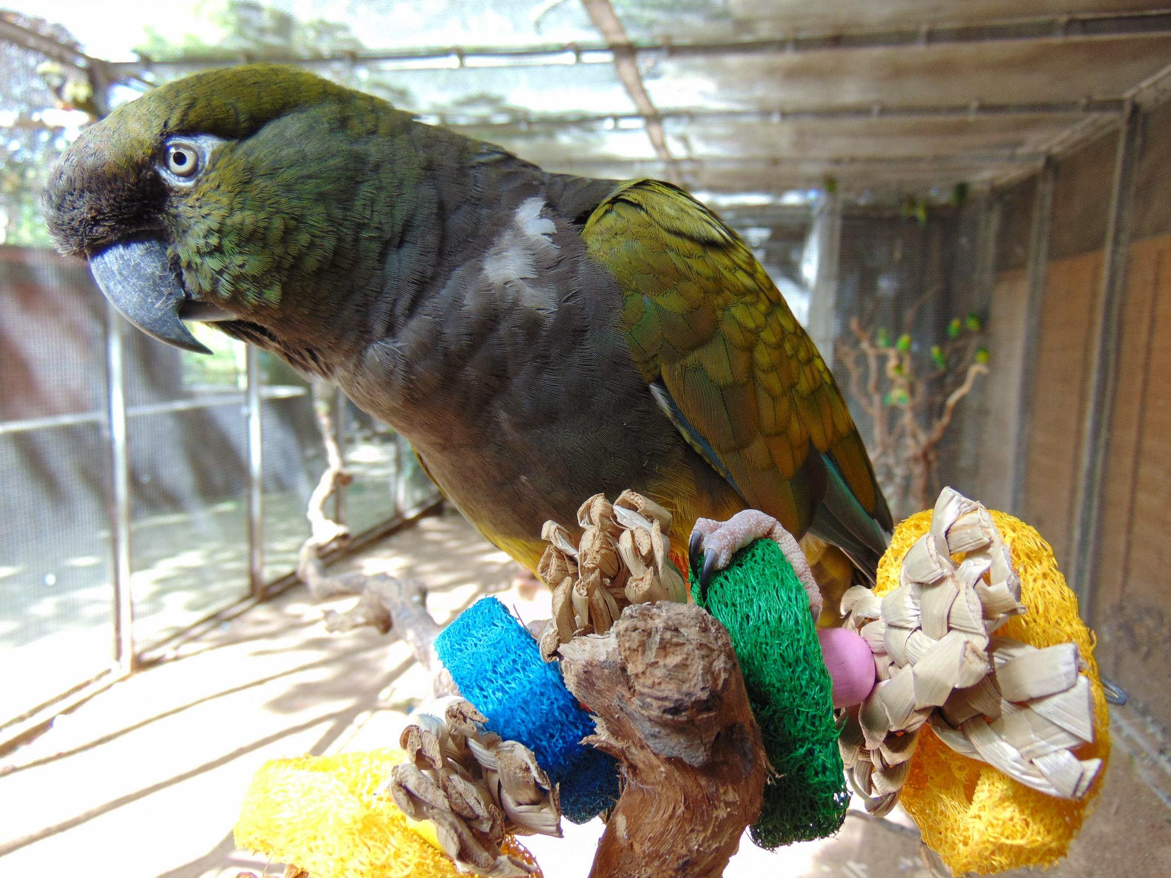 One of the conures keeping a low profile