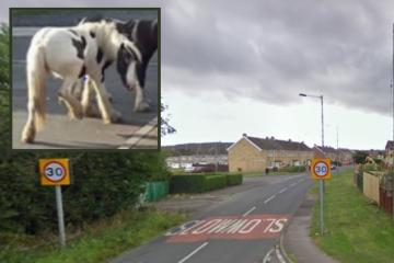 Police called to reports of 30 loose horses on road