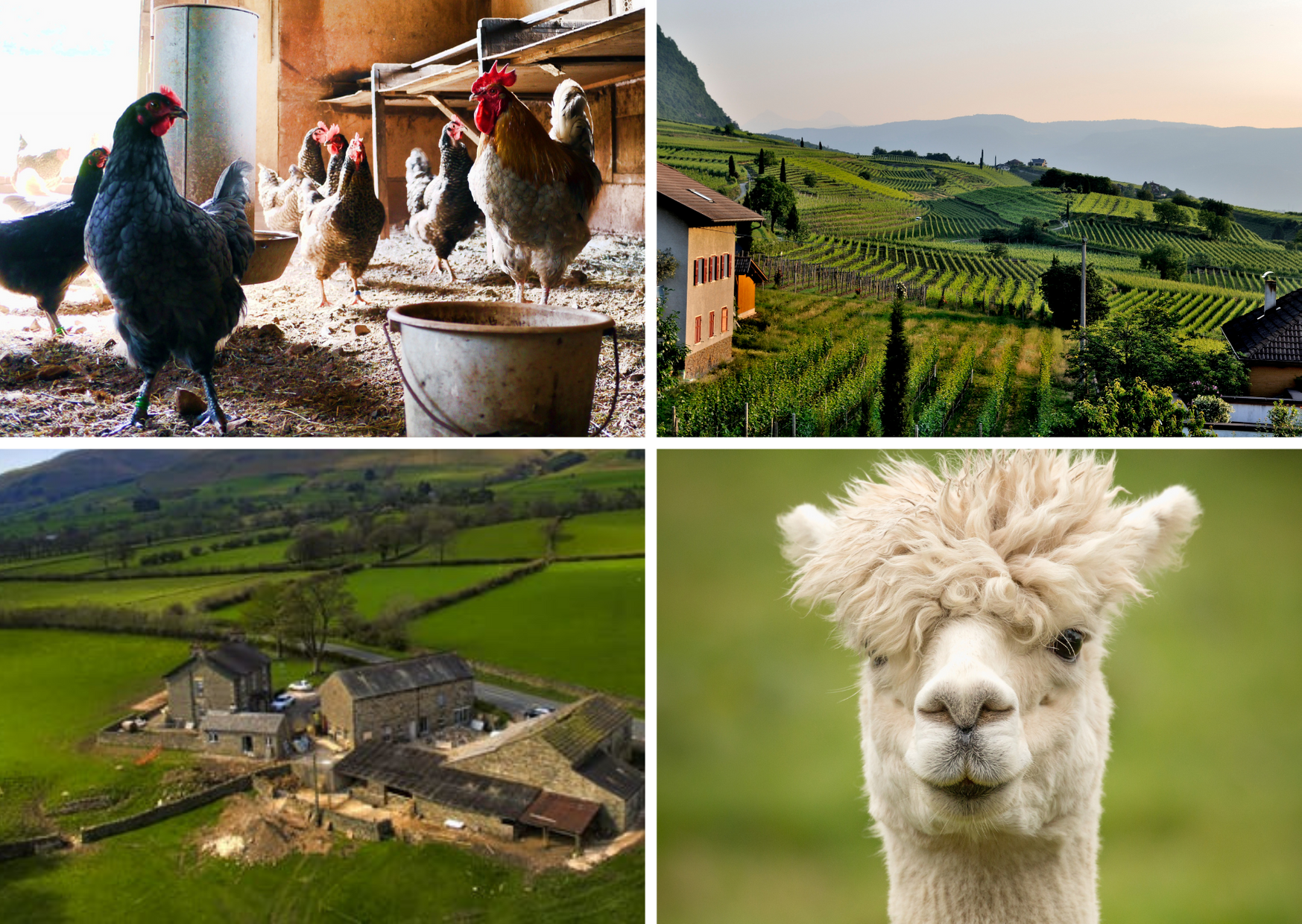Five perfect farm staycations around the North-East and North Yorkshire