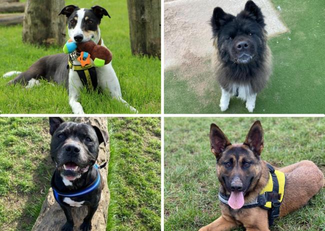5 dogs looking for forever homes after being at Dogs Trust Darlington for years