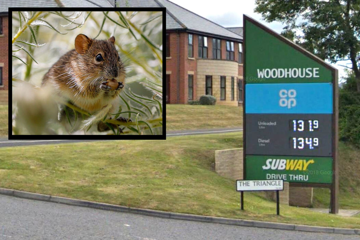 Co-op shop gets new hygiene rating after mouse 'droppings' found during inspection