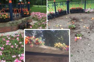 Vandals destroy floral displays in Spennymoor