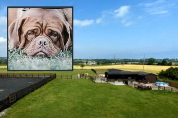 Dogue de Bordeaux breeder can keep County Durham kennels