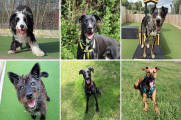 10 dogs ready to be rehomed at Darlington Dogs Trust