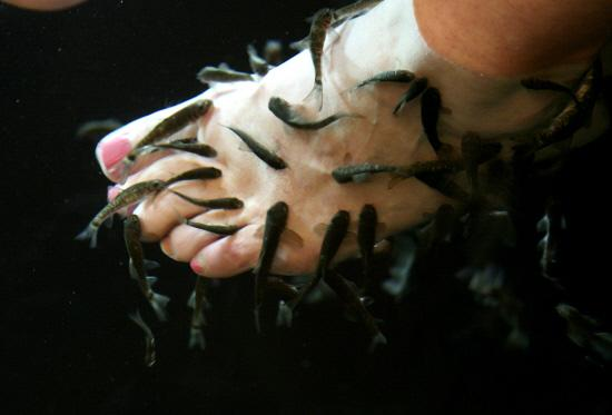 Doctor fish give feet a clean gill of health from the for Fish cleaning feet