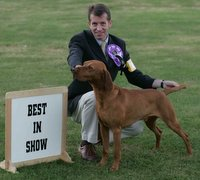 WINNER: Yogi, owned by K Armstrong and N Cragg, pictured with handler John Thirwell, from Gateshead