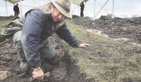 AT WORK: Phil Harding at the Time Team site   near High Coniscliffe, County Durham