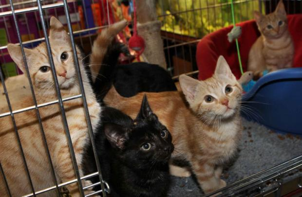 HOMES NEEDED: The five kittens that were dumped in Darlington