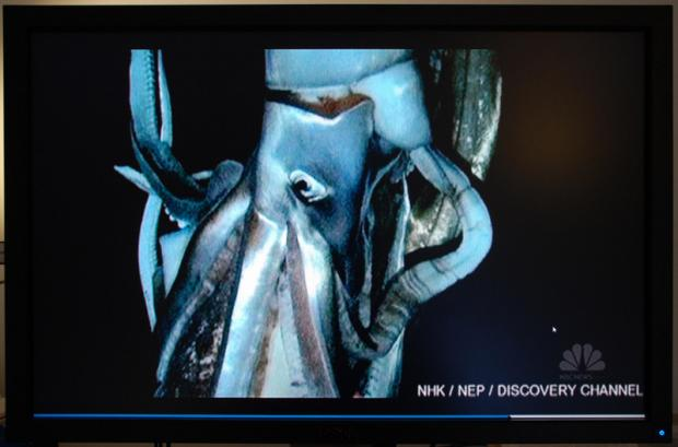 BIG SQUIRM: Some of the footage of the giant squid, including its huge tentacles, below