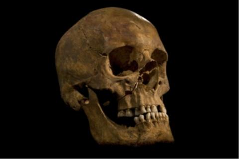 RICHARD III: Scientists say this is the king's skull