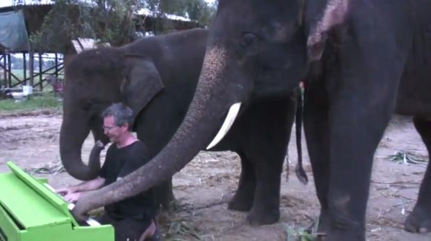 Paul Barton plays piano with Peter the elephant in Thailand