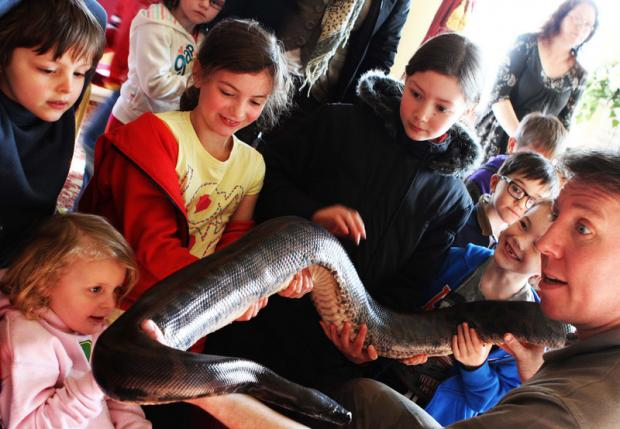 ANIMAL VISIT: Jay Gunn, from Jay's Animal Encounters, shows a snake to youngsters at Bowes Museum, Barnard Castle, yesterday. The museum is staging several events during the half-term break