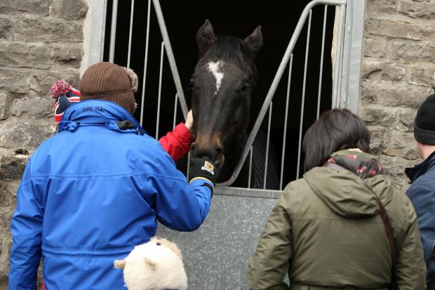 Middleham Stables Open Day
