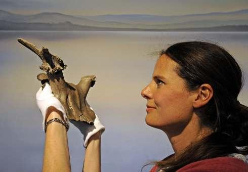 Professor Nicky Milner holds an 11,000 year old red deer head dress, which was thought to be used during shamonic rituals by Mesolithic hunters at Star Carr.