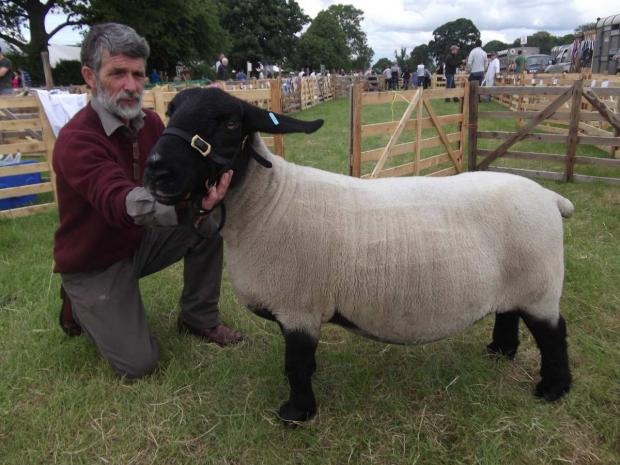 Lester Peel, with his Pedigree Suffolk, at this year's North Yorkshire County Show.